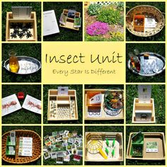 Really cute learning ideas with zoology 1 theme: Insect Unit w/ Free Printables