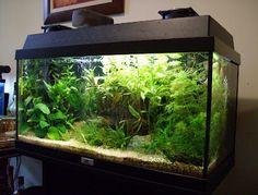 Fish tanks themed asian