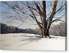 Old Oak White Road Canvas Print by Sandra Strohschein