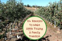 Come and see 10+ reasons to make apple picking a family tradition! Also includes helpful tips when looking for the perfect orchard to visit for your family.