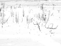 Like cold #snow #winter #minnesota #midwest #freezing #stillwatermn #monochrome #tonality