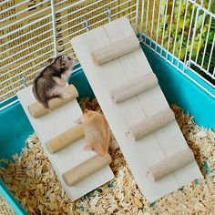 Hamster Toys Wooden Hanging Ladder Bridge Seesaw Swing Mouse Parrot Harness - pets.goshoppins.c... - http://amzn.to/2h50xSk
