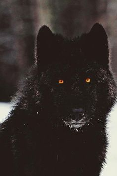 I originally had Liam (the protagonist) as a white wolf, and then I thought of how cliche that is. And then I thought of how the concept of race would play into the fantasy world. I decided that shifters tend to be fairly dark-skinned, which could come across in their fur color.