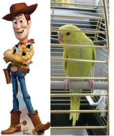 My budgie Woody travelling :-)