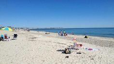 Bird watchers, take note: Piping plovers love Duxbury Beach, Massachusetts