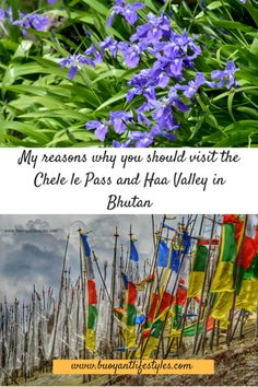 My reasons why you should visit the Chele le Pass and Haa Valley in Bhutan - Buoyant Lifestyles #haavalley #bhutan #bhutantravel #bhutantravelguide #placestovisitinbhutan +Bhutan