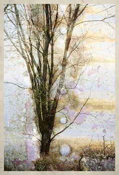 Joan M. Inspire Me, Composition, Digital Art, Layers, Collage, Trees, Photoshop, Quilts, Creative