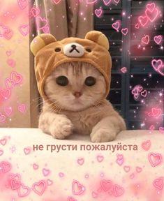 Hello Memes, Gatos Cat, Happy Memes, Russian Memes, Cute Love Memes, Cute Baby Cats, Cute Messages, Cute Texts, Mood Pics