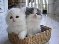 kitty by aninha's sundries