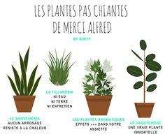 Infographie sur les plantes faciles à entretenir #diwyp #doitwithyourplants