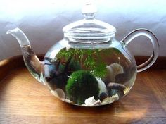 Glass Teapot Green Tea Marimo Moss Ball Mini Aquarium by MyZen Marimo Moss Ball Terrarium, Terrarium Plants, Indoor Water Garden, Indoor Plants, Mini Aquarium, Aquarium Ideas, Moss Decor, Decoration Plante, Glass Containers