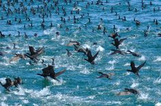 Both whale and bird watching in Hermanus are outstanding activities, with year-round action and many interesting species to gaze upon. Win Prizes, Down South, Bird Watching, Marine Life, South Africa, Whale, Wildlife, Environment, African