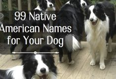 99 Native American Names for Male Dogs