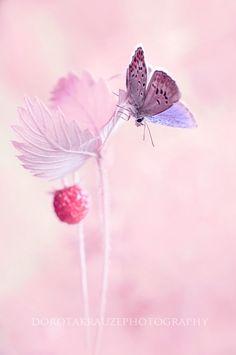 < by Dorota Krauze on ;< by Dorota Krauze on >;< by Dorota Krauze on Papillon Butterfly, Butterfly Kisses, Butterfly Flowers, Beautiful Butterflies, Pretty In Pink, Beautiful Flowers, Butterfly Wings, Beautiful Creatures, Animals Beautiful