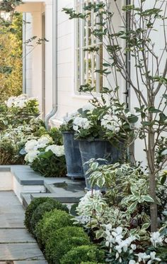 A thriving garden landscape design will consist of appropriate soil requirements for the kinds of plants that you choose in your garden. You are able to make your own compost in your front yard and…MoreMore Boxwood Landscaping, Front Yard Landscaping, Landscaping Ideas, Acreage Landscaping, Outdoor Landscaping, Boxwood Hedge, Country Landscaping, Front Yard Hedges, Moon Garden