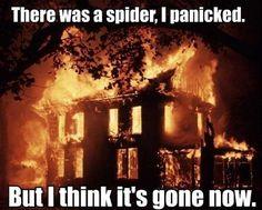 Not a fan of spiders.