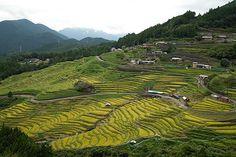 熊野市の丸山千枚田へ・・。 とても美しい景色でした。