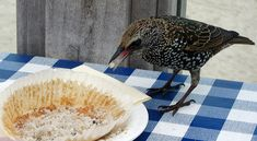 CAROLYN SAXBY - starlings love blueberry muffins at Porthgwidden café Porthgwidden beach St. Carolyn Saxby, Beast From The East, Pretty Beach, Holly Leaf, Art Archive, How To Make Tea, Blue Berry Muffins, Textile Artists, Simple Pleasures