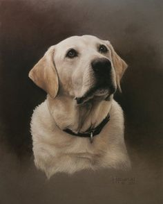 Yellow Labrador Retriever - pastel drawing by Debi Fitzgerald