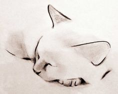 Minimalist ink and charcoal drawings of cats, dogs, birds, deer and other animals by artist Kellas Campbell. Watercolor Cat, Watercolor Artwork, Watercolor Animals, Tattoo Watercolor, Cat Drawing, Painting & Drawing, Animal Drawings, Pencil Drawings, Desenho Tattoo