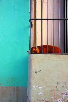 copyright Brock Elbank on all images. Cuba, Art Photography, Dog, Photos, Fine Art Photography, Pictures, Doggies, Kobe, Dogs