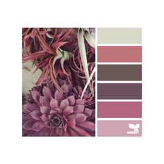 succulent tones ❤ liked on Polyvore featuring color palette