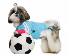 Indoor Exercise for Your Dog