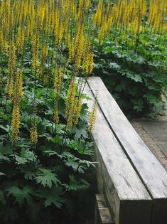 The Rocket Ligularia: shade garden This could easily be mistaken for a tropical plant—but it's really an easy-to-grow perennial. Plants reach 3-5 ft. tall with big, leathery leaves that are rich green on top with ebony to purple underneath. Bright yellow blooms form dense racemes 18-24 in. long in midsummer. Prefers partial to full shade. Zones 4-8