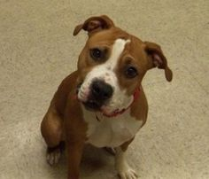 Marlow is such a great dog, we knew he would get adopted quickly!!! Best of luck sweet boy!