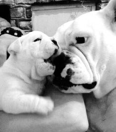 This is Love, French Bulldog Dad and his Puppy. Bulldog Puppies, Cute Puppies, Cute Dogs, Dogs And Puppies, Baby Animals, Funny Animals, Cute Animals, Bully Dog, Cute Creatures