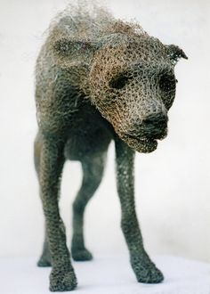 "Kendra Haste is a UK artist, and a graduate of the Royal College of Art. She is best known for her life size animal sculptures. Using galvanized wire that is sculpted on a steer armature, Haste creates steadfast representations of wild animals. She says what she is most interested in is how a mundane medium, chicken wire, can be manipulated and transformed into suggesting ""the sense of movement and life, of contour and volume,the contrasts of weight and lightness, or solidity and…"
