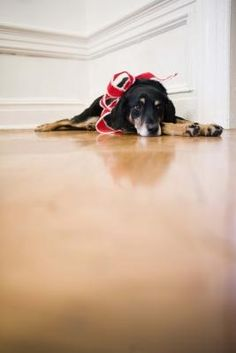 how to remove pet stains on hardwood floors | cleaning, dog urine