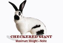 The American Rabbit Breeders Association currently recognizes 47 unique rabbit breeds and 13 different breeds of cavies Woodworking Guide, Custom Woodworking, Woodworking Projects Plans, Raising Rabbits For Meat, Meat Rabbits, Bunny Rabbits, Rabbit Facts, Giant Rabbit, Rabbit Breeds
