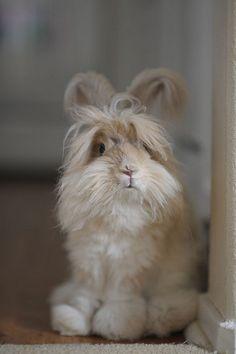 Lion head bunny #sweet #cute