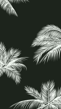 Black white palm leaves palm trees iphone background phone wallpaper lock screen – White and Black Wallpaper Locked Wallpaper, Tumblr Wallpaper, Screen Wallpaper, Cool Wallpaper, Mobile Wallpaper, Wallpaper Ideas, Marble Wallpaper Hd, Cool Pictures For Wallpaper, Forest Wallpaper