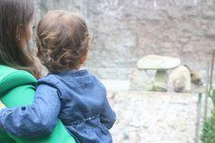 Actividade: Jardim Zoológico da Maia | Baby & Kids