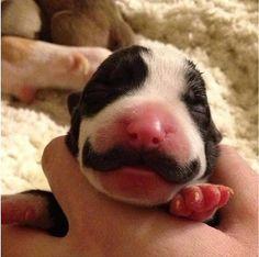 Puppy mustache...