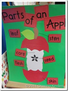 Apple Theme for Preschool/Daycare - Apple unit ideas Preschool Apple Theme, Fall Preschool, Kindergarten Science, Kindergarten Classroom, Classroom Activities, Kindergarten Apples, Preschool Apples, September Preschool, Apple Theme Classroom