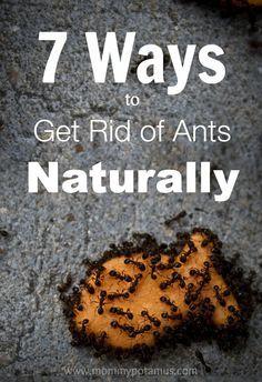 7 Ways To Get Rid of Ants Naturally with essential oils