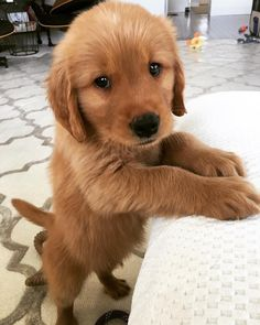 Super Cute Puppies, Cute Baby Dogs, Cute Dogs And Puppies, I Love Dogs, Doggies, Baby Animals Pictures, Cute Animal Pictures, Dog Pictures, Funny Dogs