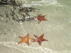 Starfish beach. They were everywhere and large