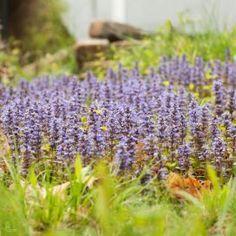 Small lavender flowers www.palkievent.com
