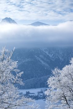 Winter Morning by Wojciech Toman on 500px  )
