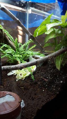 New plants!!