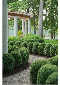 "flowersgardenlove: "" Box hedges Beautiful gorgeous pretty .ColdClimateGardenings: flowersgardenlove: "" Box hedges Beautiful gorgeous pretty . Boxwood Garden, Topiary Garden, Garden Shrubs, Shade Garden, Boxwood Hedge, Dwarf Boxwood, Formal Gardens, Outdoor Gardens, Box Hedging"
