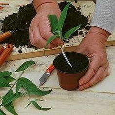 Kalenderen til at skære blomster og buske med ornamenter - Jack West