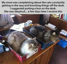 cat traps. I did this and it really works. They love their box beds.:-)