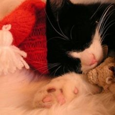Sleepy Christmas kitty