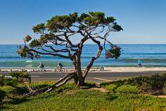 Beach view in Carlsbad, California