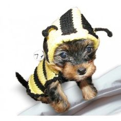 Bumble bee dog costume / sweater Price from $15 to $25 Check out our site for more information about this beautiful dog sweater. Custom orders with measurements of your dogs are very welcomed :)